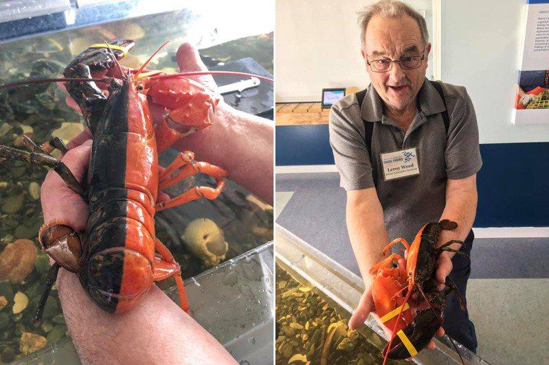 圖片來源/「Maine Center for Coastal Fisheries」FB粉專