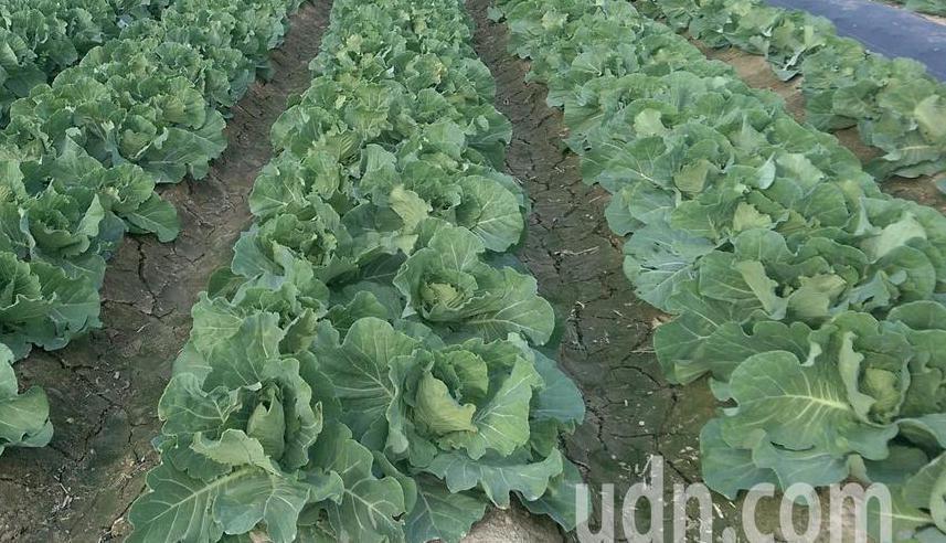 當季盛產蔬果所需要的農藥量會通常較低,因此專家建議多買當季蔬果。報系資料照