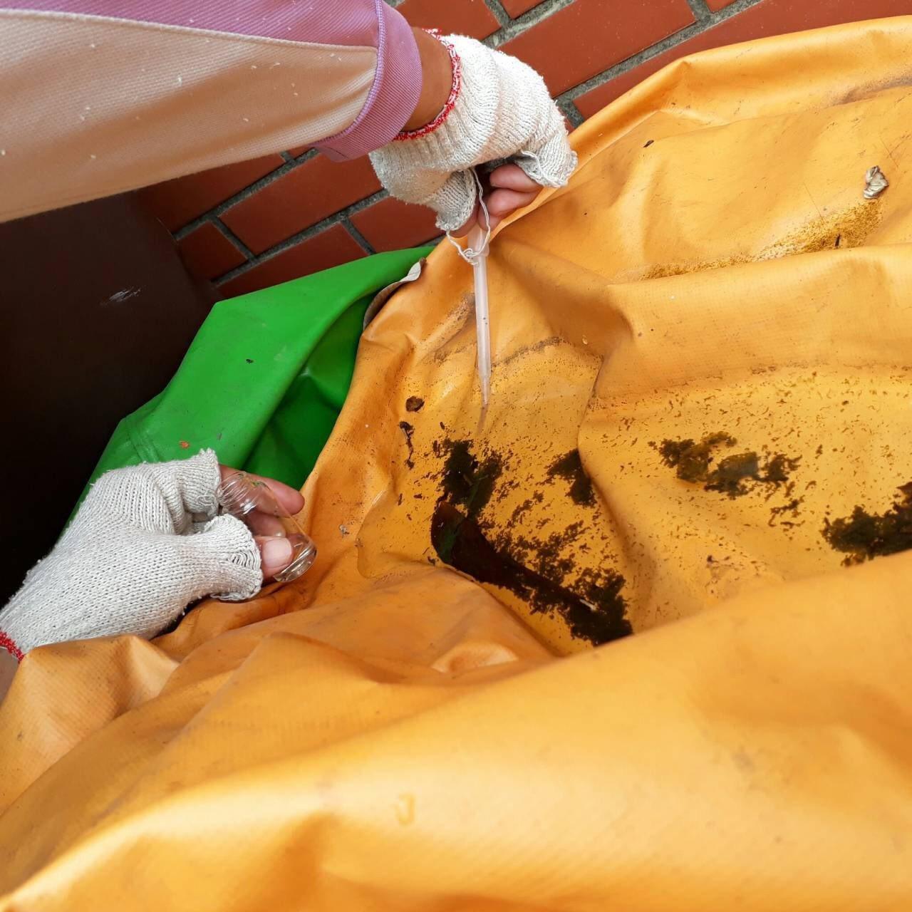 台南市衛生局提醒國內目前不僅有登革熱流行,還有不少屈公病例,都必須加強積水清掃。...