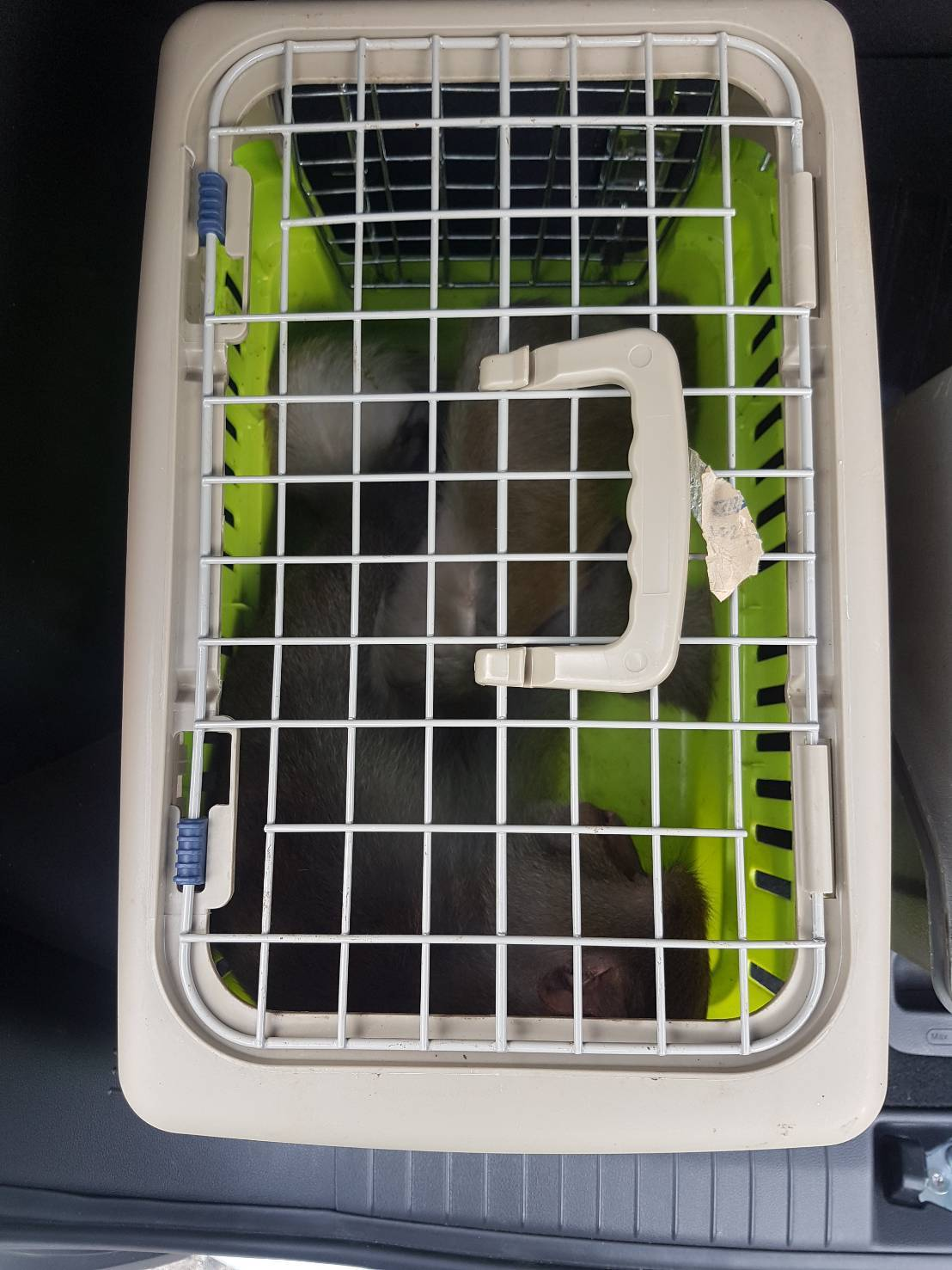 南庄神仙谷傳出有獼猴騷擾、攻擊遊客,苗栗縣政府農業處昨天下午派員將猴子逮住。圖/...