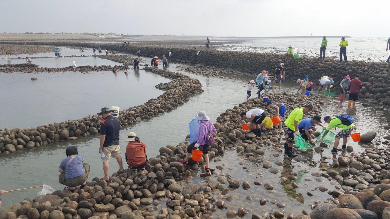 苗栗縣後龍鎮一連四年推出「石滬文化節」,吸引親子、民眾在滬內體驗傳統的捕撈樂趣。...