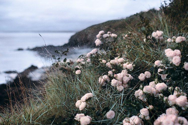 迪奧萃取岡維拉玫瑰,在南法海岸峭壁上險峻不易生長的地方,而蘊含岡維拉玫瑰所蘊含的...