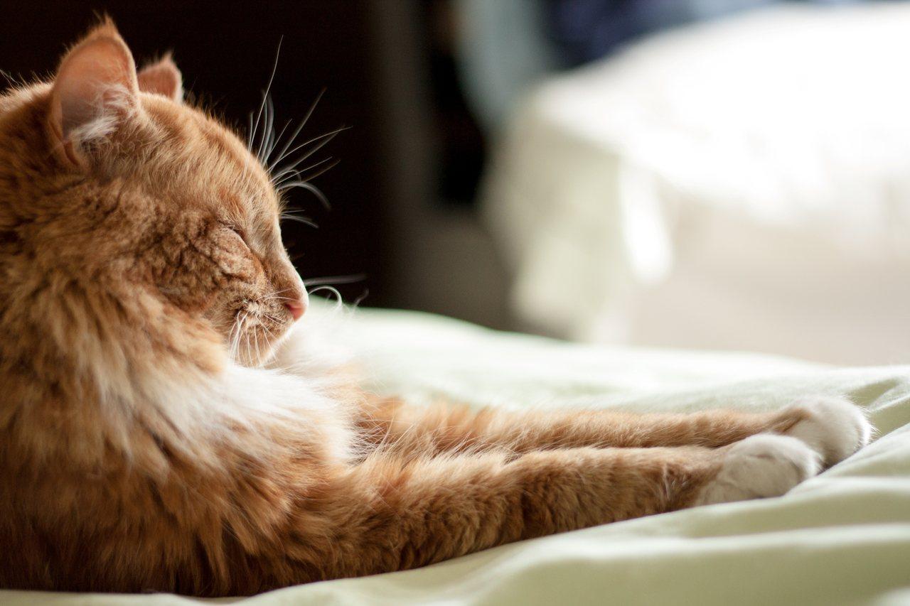 寵物以狗兒子居多,但相較5年前家貓成長了27%,「貓奴」大增。 圖/ingima...