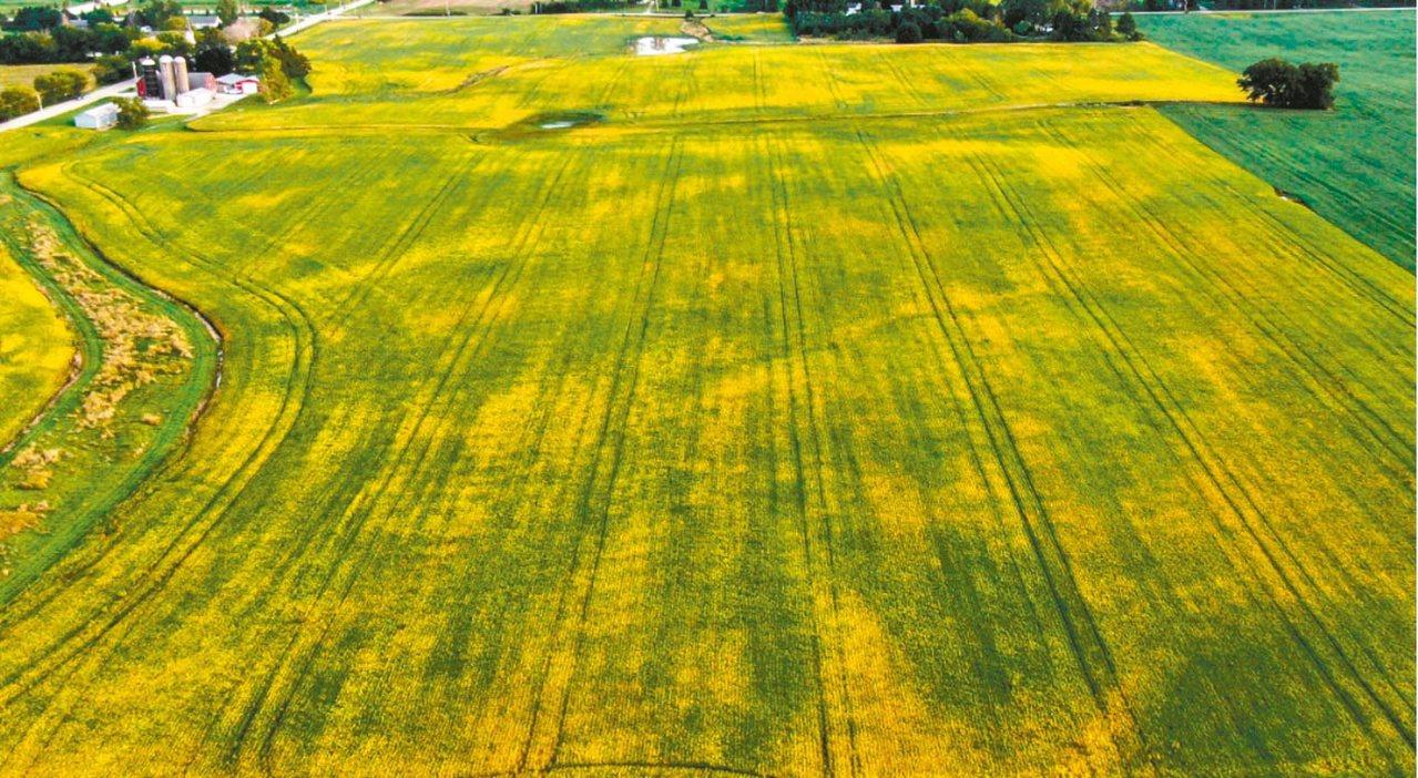中國農業代表團原定下周參訪美國農場,但中方20日臨時取消參訪計畫。歐新社