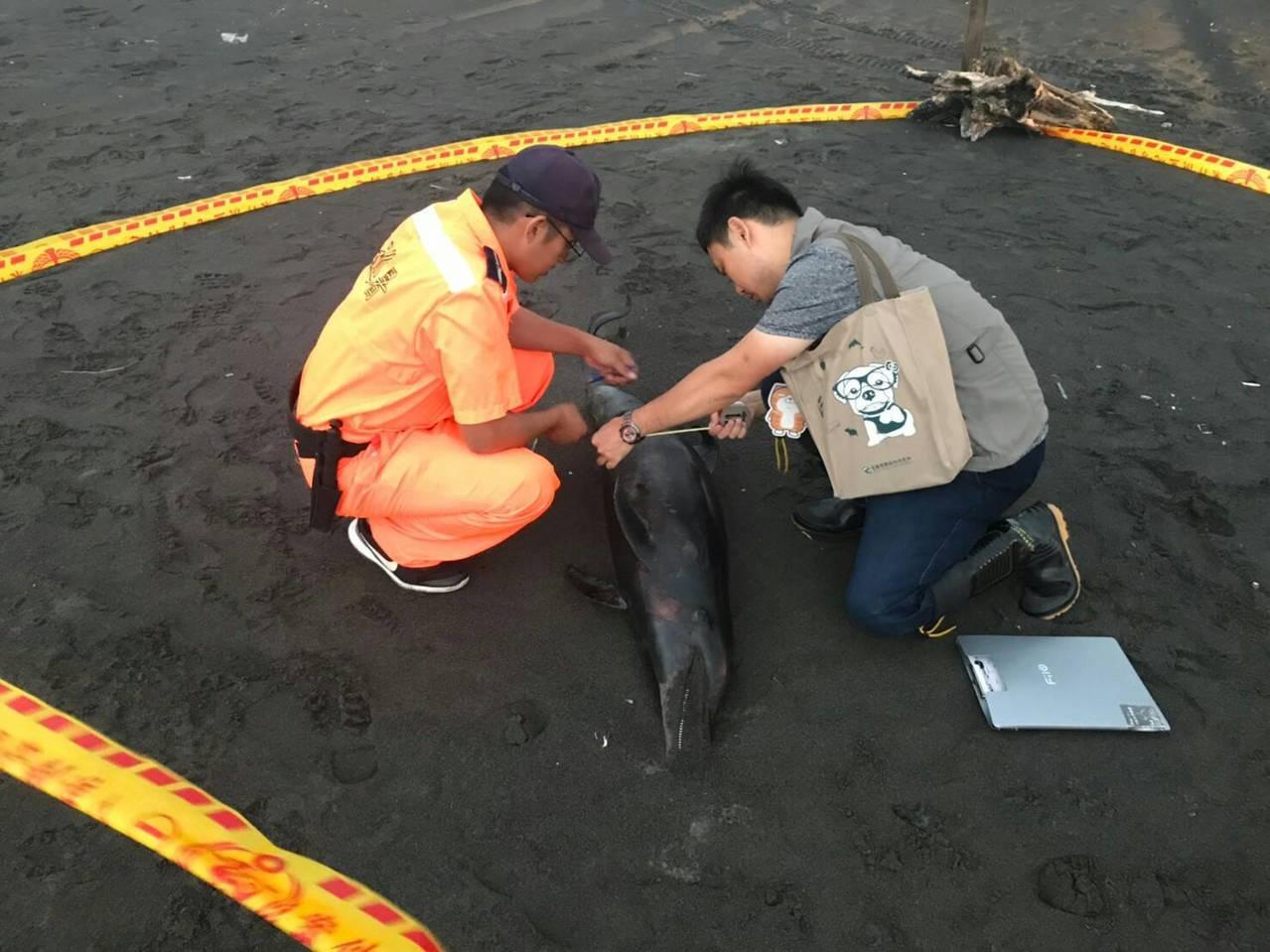 今年第5例!海豚在宜蘭沙灘擱淺喪命