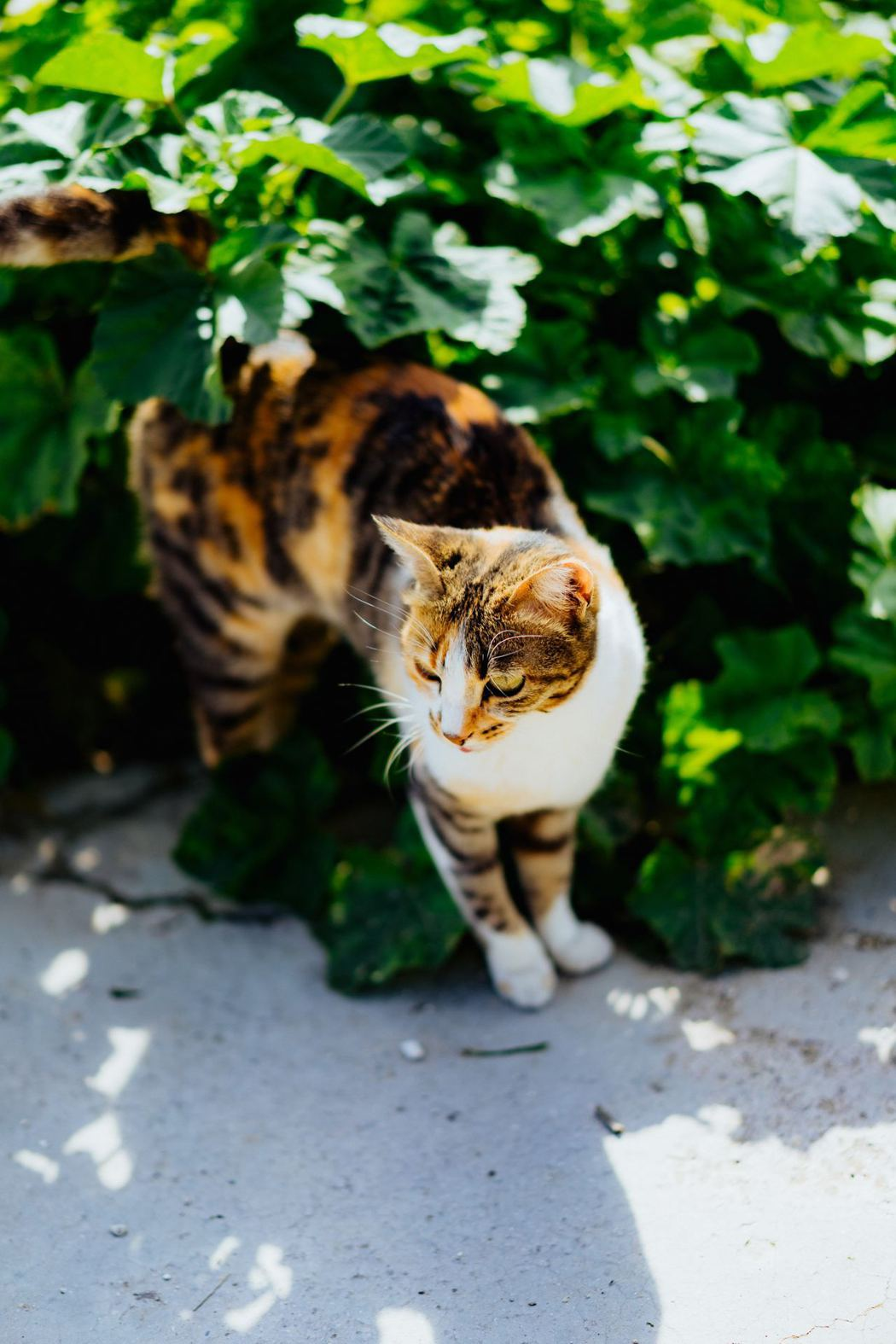 不少狗貓水分攝取不夠,導致活動力下降。圖/美國寵物食品協會提供