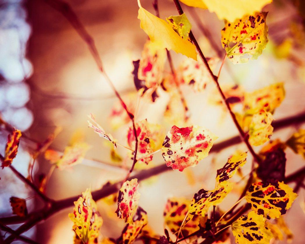 9月23日就是秋分了,中醫認為這時自然界的陽氣漸收,陰氣漸長、景物蕭條景物蕭條空...