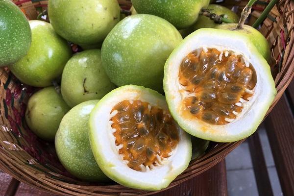 新品種黃金百香果,酸度低、口感香甜。 圖/台灣好食材提供,鐘玉霞攝