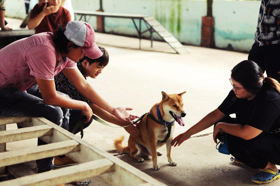 「有沒有搞錯?老Hac養一隻日本柴犬?」這個結果讓許多越南網友難以接受,雖然有人...