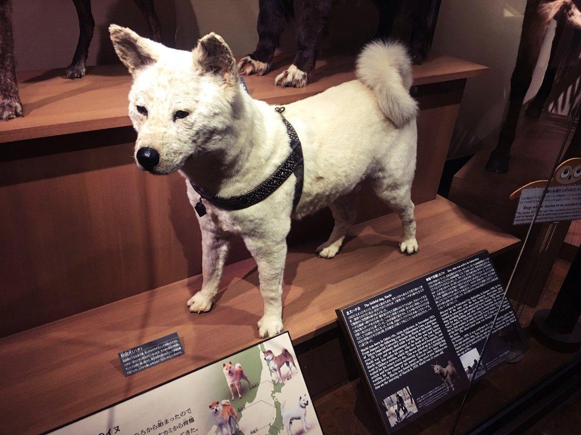 有日本媒體將老Hac與小黃的故事類比成日本著名的忠犬八公,卻也讓日本的網友一頭霧...
