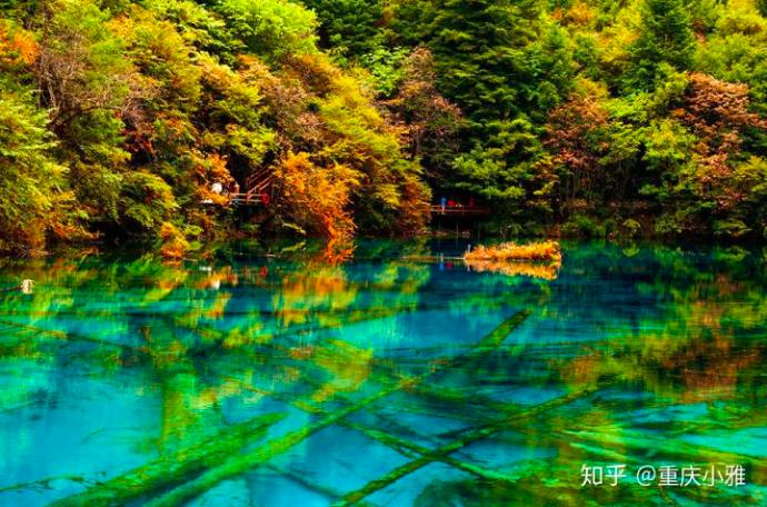 九寨溝核心景區的植被生態景觀已逐漸恢復至震前水平。(新浪微博照片)