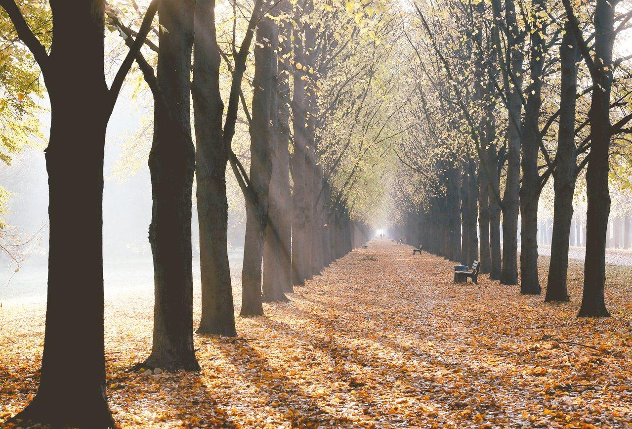 英國公益組織發動全民11月30日種樹行動。 美聯社