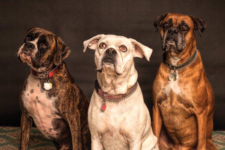 愛狗的人,都會覺得自己的狗超聰明。圖/摘自Pelexs