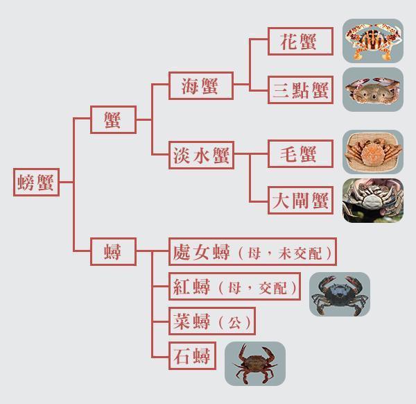 國人愛吃的螃蟹分為這幾種。 圖片提供/Fooding台灣好食材
