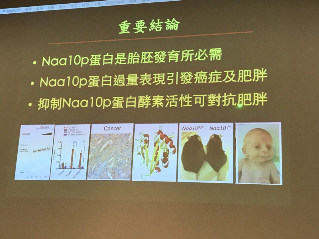 研究證實,Naa10p蛋白除是嬰兒胚胎發育所必需,若過量可能引發肥胖及癌症風險外...