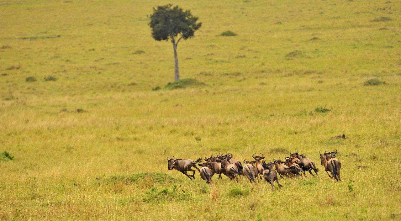 蘋果最新的投資計畫瞄準肯亞大草原。新華社