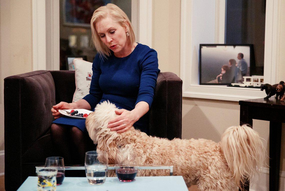 美國民主黨參議員陸天娜家中也有飼養拉不拉多貴賓犬。 圖/美聯社