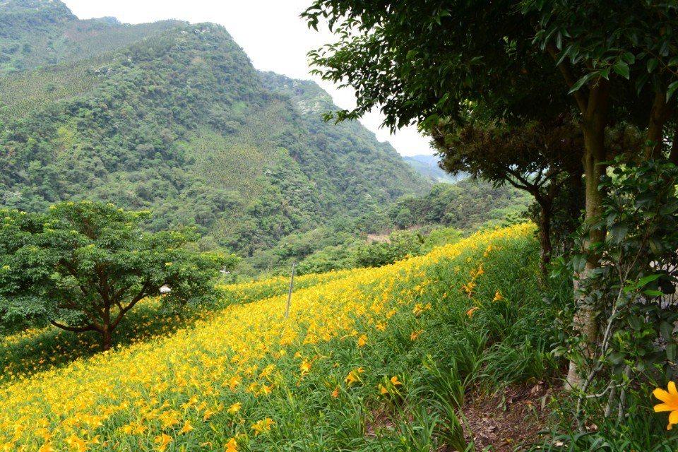 台中新社的「沐心泉休閒農場」。(圖片提供/欣傳媒)