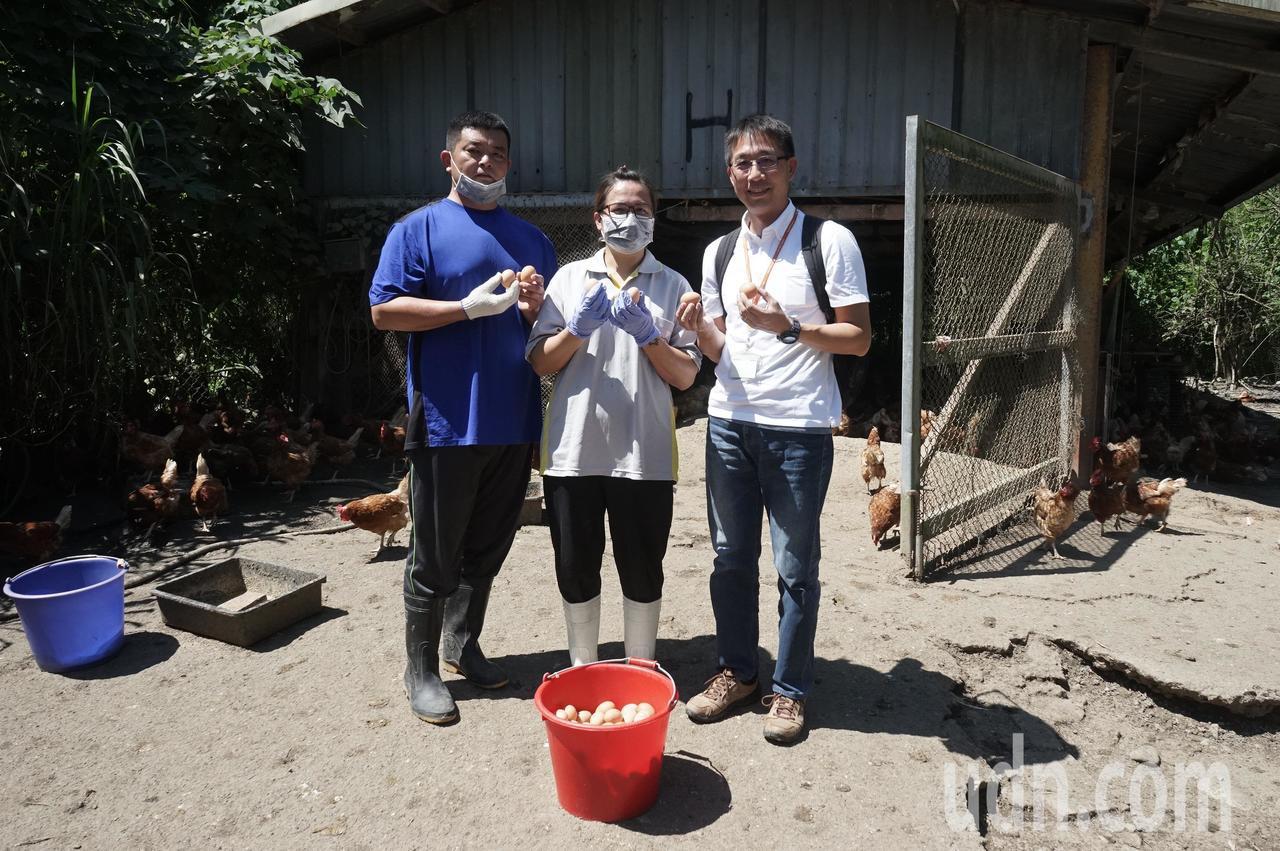 堅持讓蛋雞吃牧草放山跑 展望會助他們升級學做蛋捲