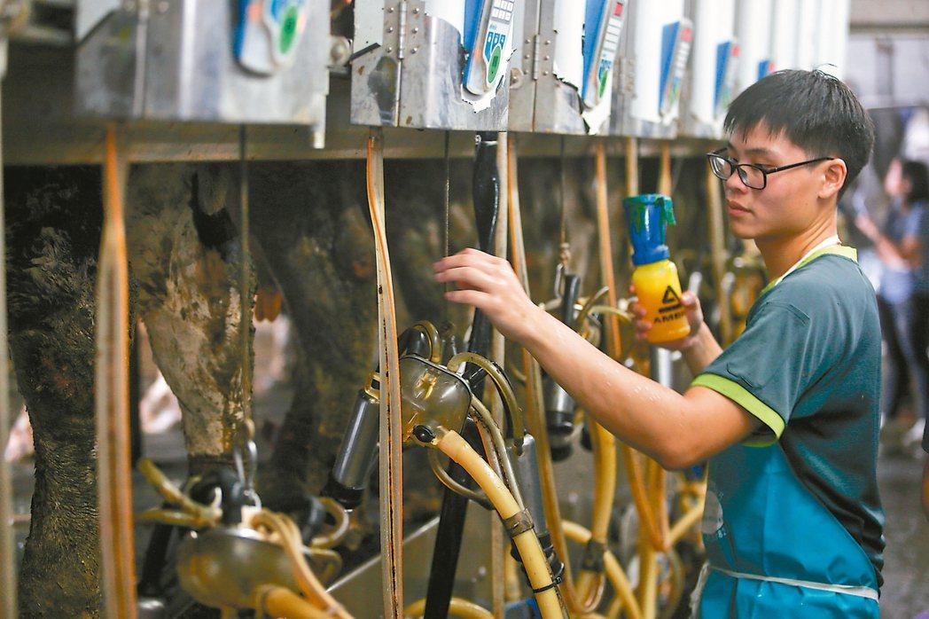 一般的乳牛場,一天幫乳牛擠兩次奶。 記者黃仲裕/攝影