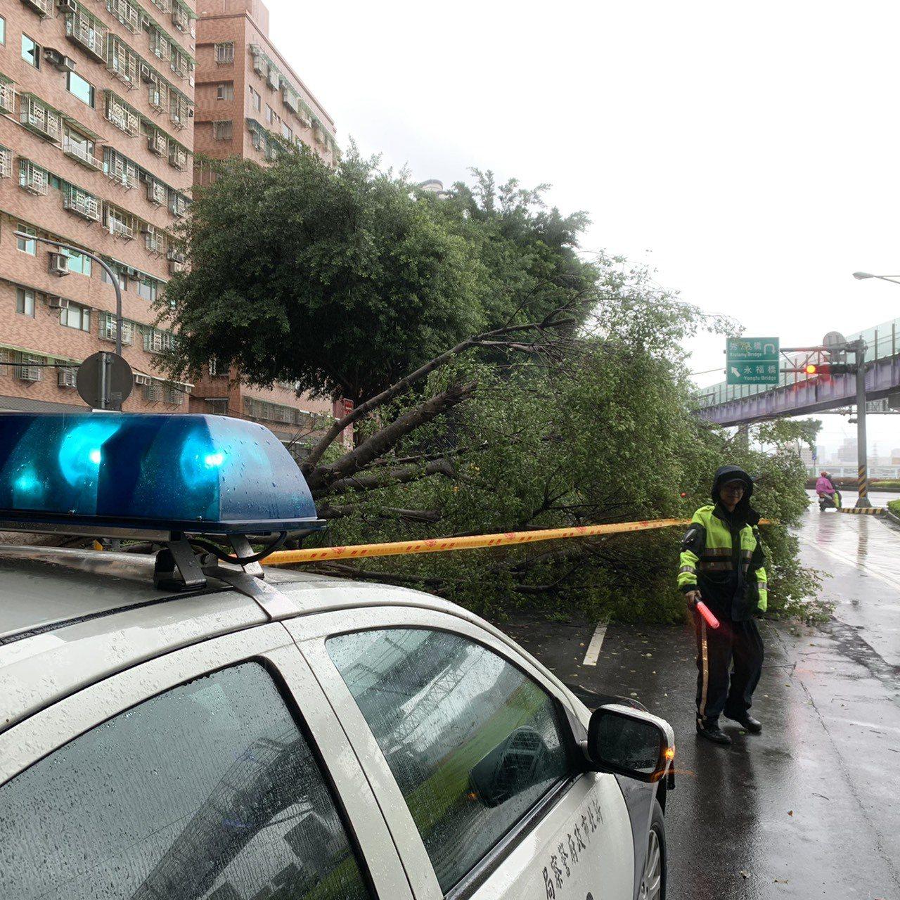 氣象局今天發布基隆及新北市豪雨特報,受到雨勢不斷,永和區環河東路發生路樹連根拔起...