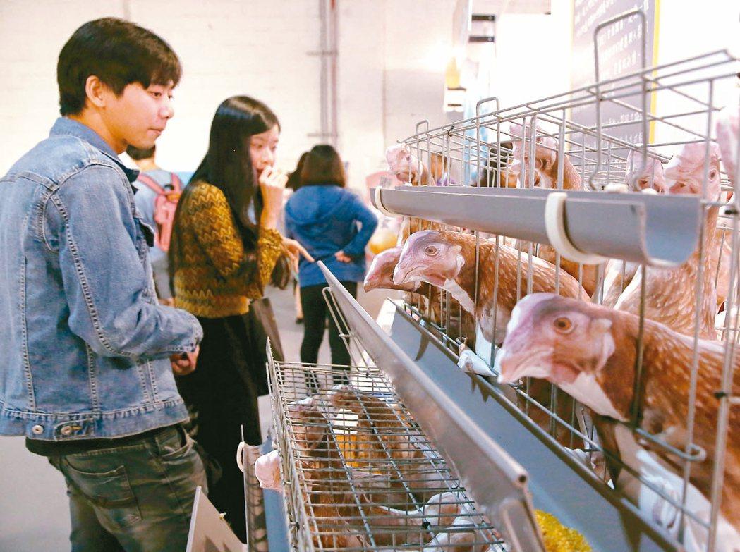 「明日餐桌」好食市集透過模擬讓民眾知道籠飼雞處境,與帶來的影響。 記者曾原信/攝...