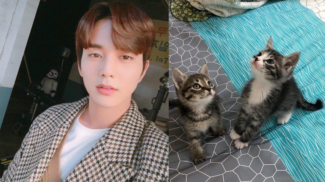 俞承豪領養2隻貓咪。圖/擷自IG