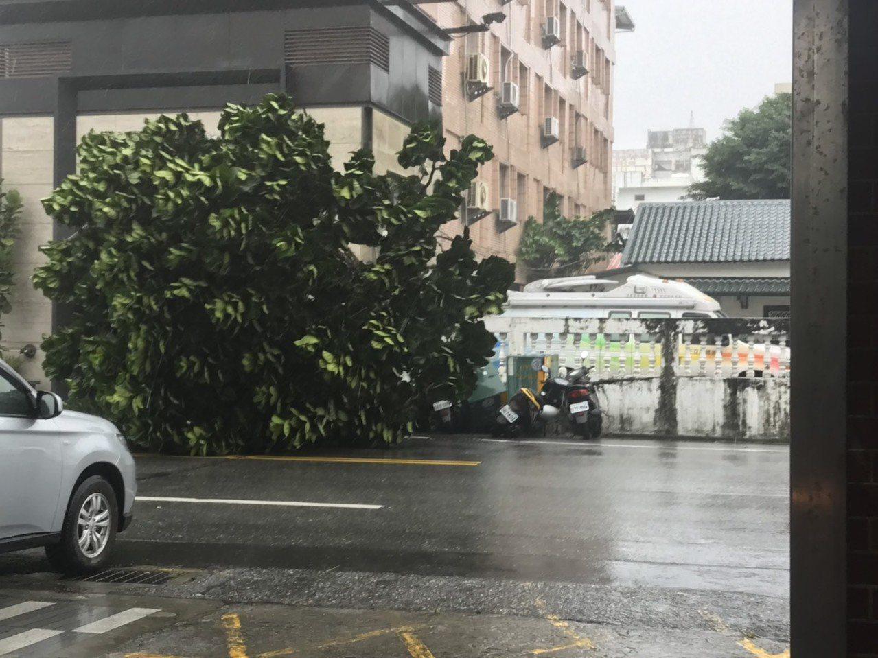 因米塔颱風帶來強風,花蓮市一棵路樹倒落,壓毀變電箱,造成15戶停電。圖/台電花蓮...