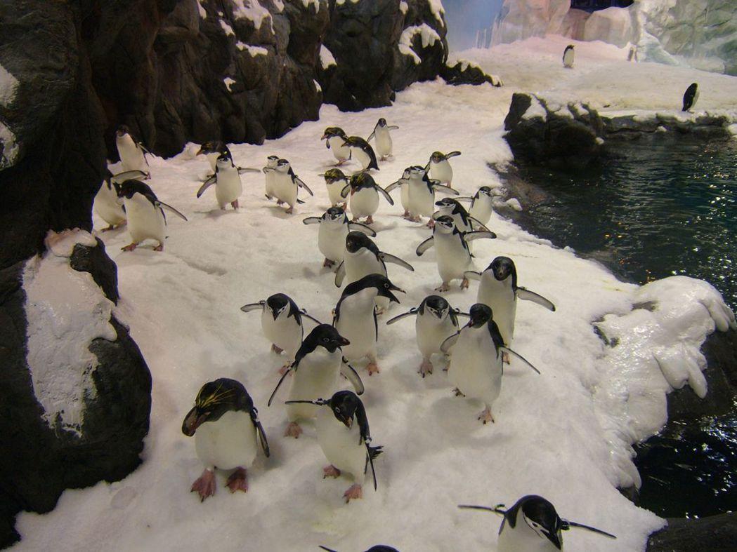 海生館成群企鵝迎接遊客。  屏東海生館 提供