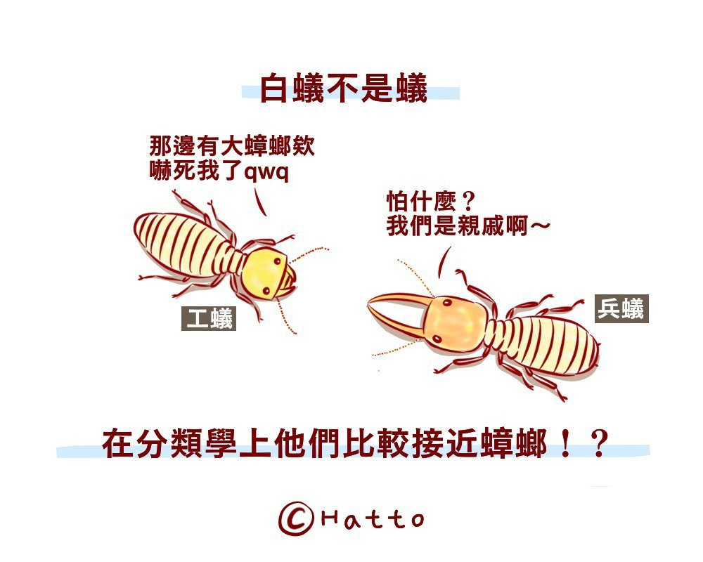 圖為白蟻中的工蟻和兵蟻。