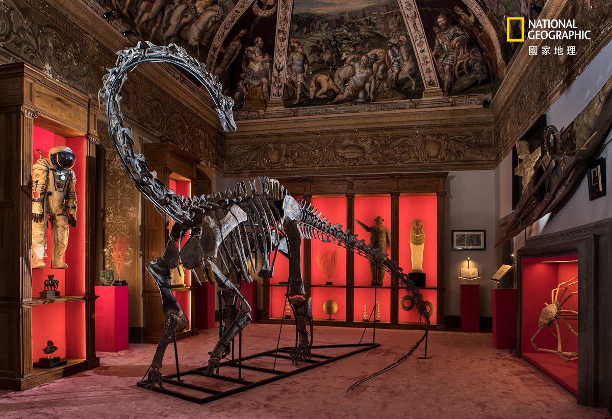 義大利阿雷索市的世界劇場藝廊中,西伯小梁龍的標本佇立在五花八門的展示品之間。 攝...