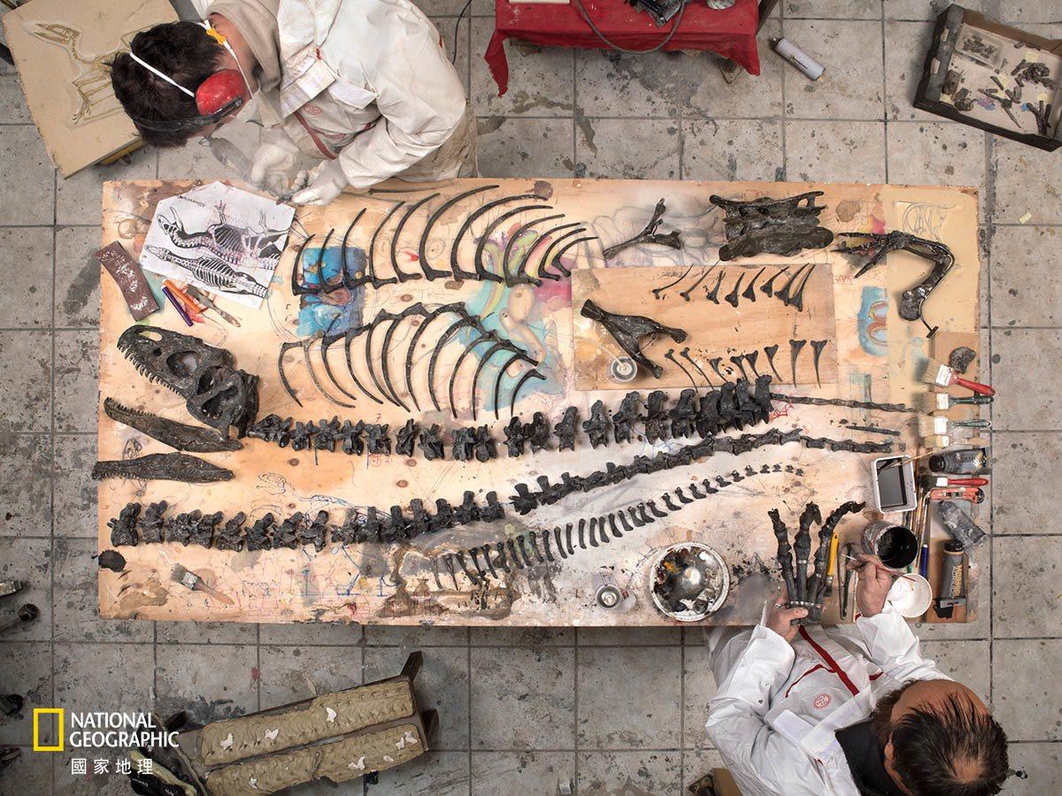 在義大利得里雅斯特市,化石修復公司「生物時代」(Zoic)的員工正在重組這隻於美...