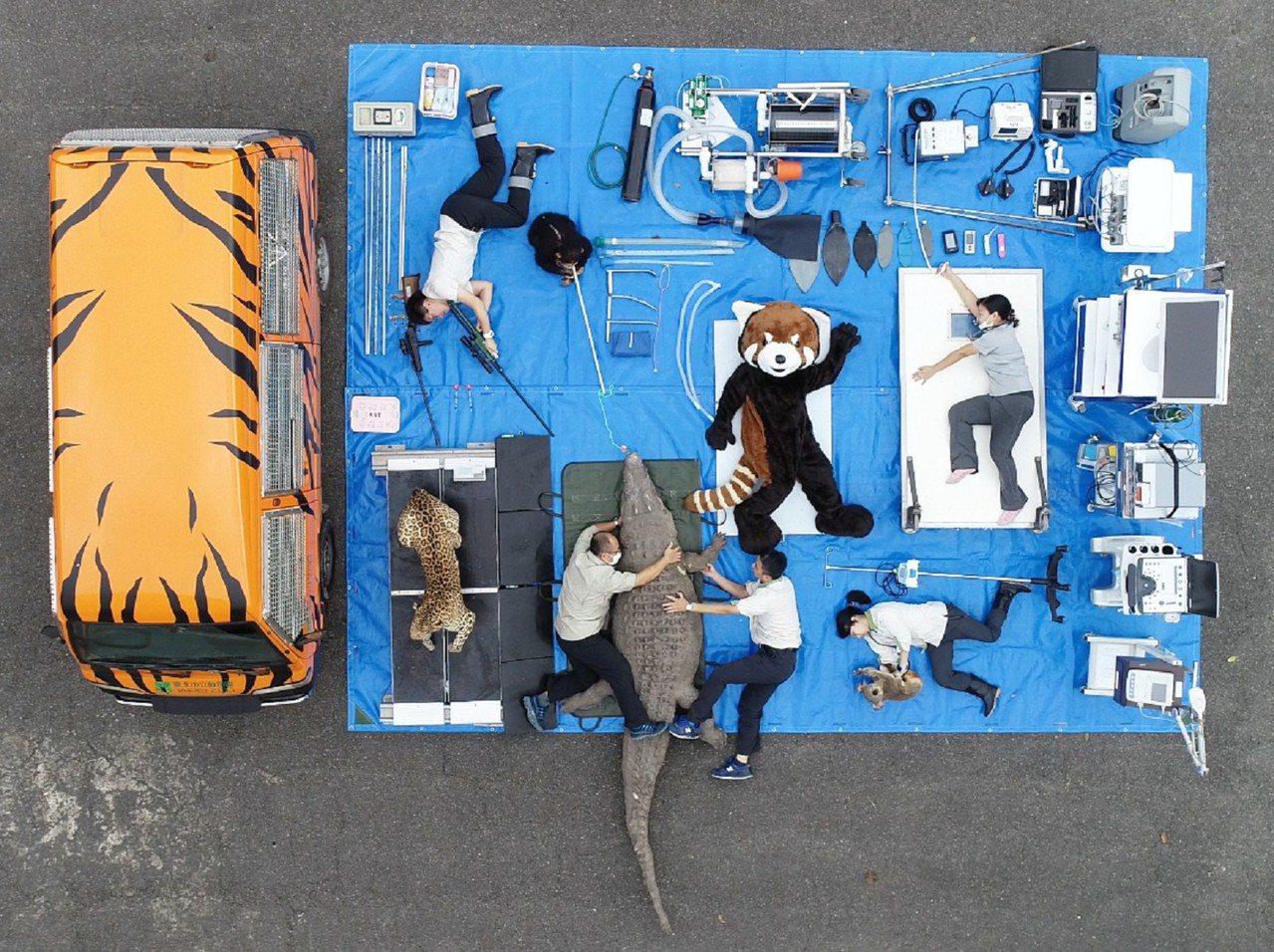 台北市立動物園動物醫院行動診療所「小虎車」肩負著守護動物健康的重責大任。圖/北市...