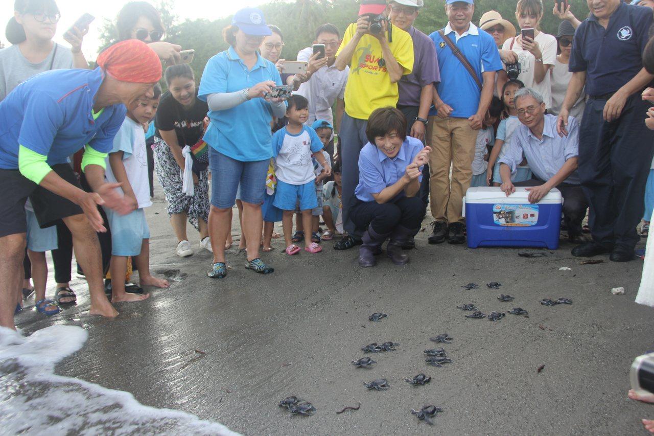 36隻小海龜昨天回歸大海。圖/台東縣政府提供