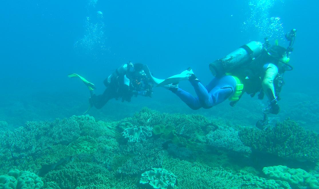 貓鼻頭潛場海底軟珊瑚遍佈、水質清澈,成為不少潛水客爭相的朝聖地點。圖/潛水教練蔡...