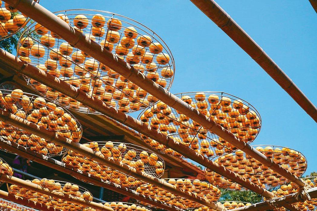 新竹縣新埔柿餅季,顆顆金黃色的柿餅曬柿架上,吸引遊客留影。 聯合報系資料照 記者...