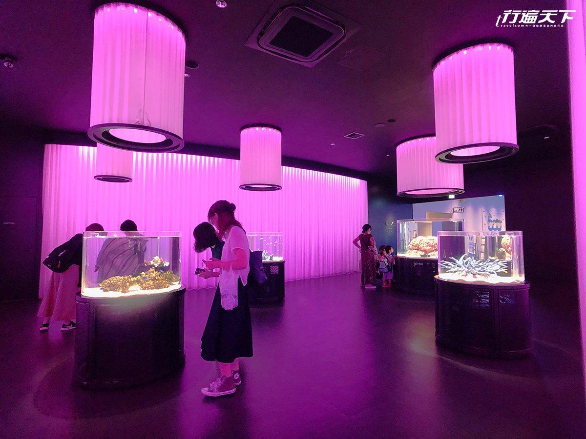 ▲NIFREL的世界裡,利用光與色彩與聲音,創造一區區美麗的活生生美術館。