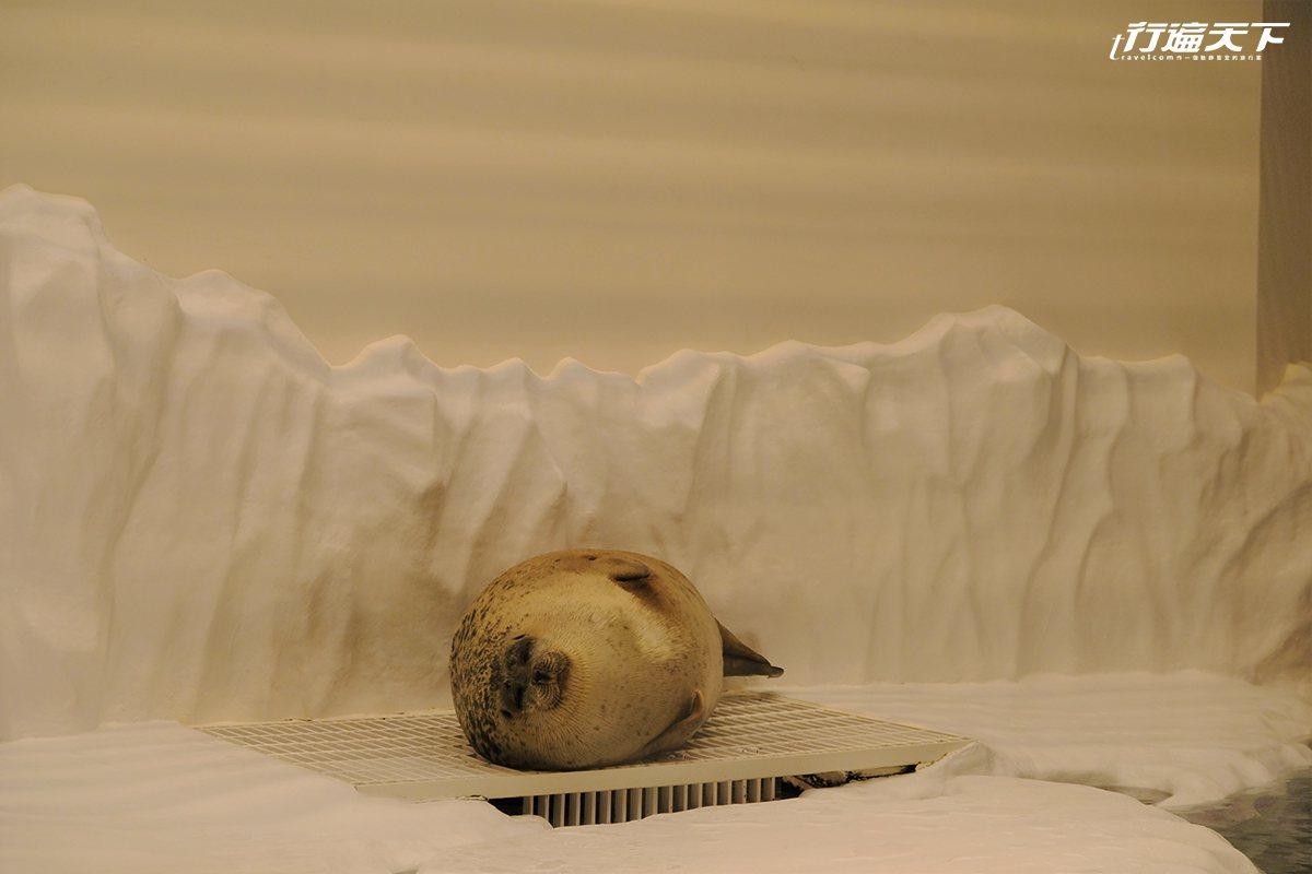 ▲目前館內最人氣的海豹,某個角度看就像是正在對著你微笑呢。