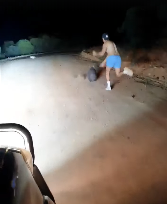 澳洲一名警察用石頭攻擊袋熊。圖取自臉書@Wombat Awareness Org...