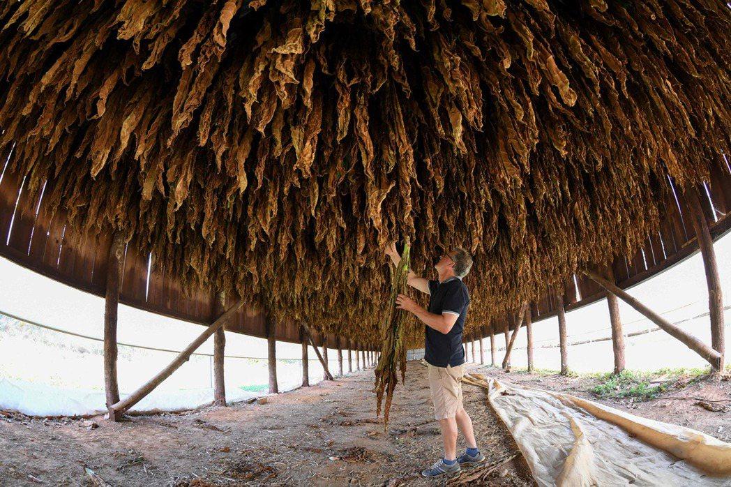 在馬澤羅萊種植菸草與經營酪農場的摩利。 (法新社)