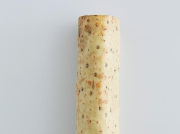 日本山藥。 圖片來源/《餐桌上的蔬菜百科》