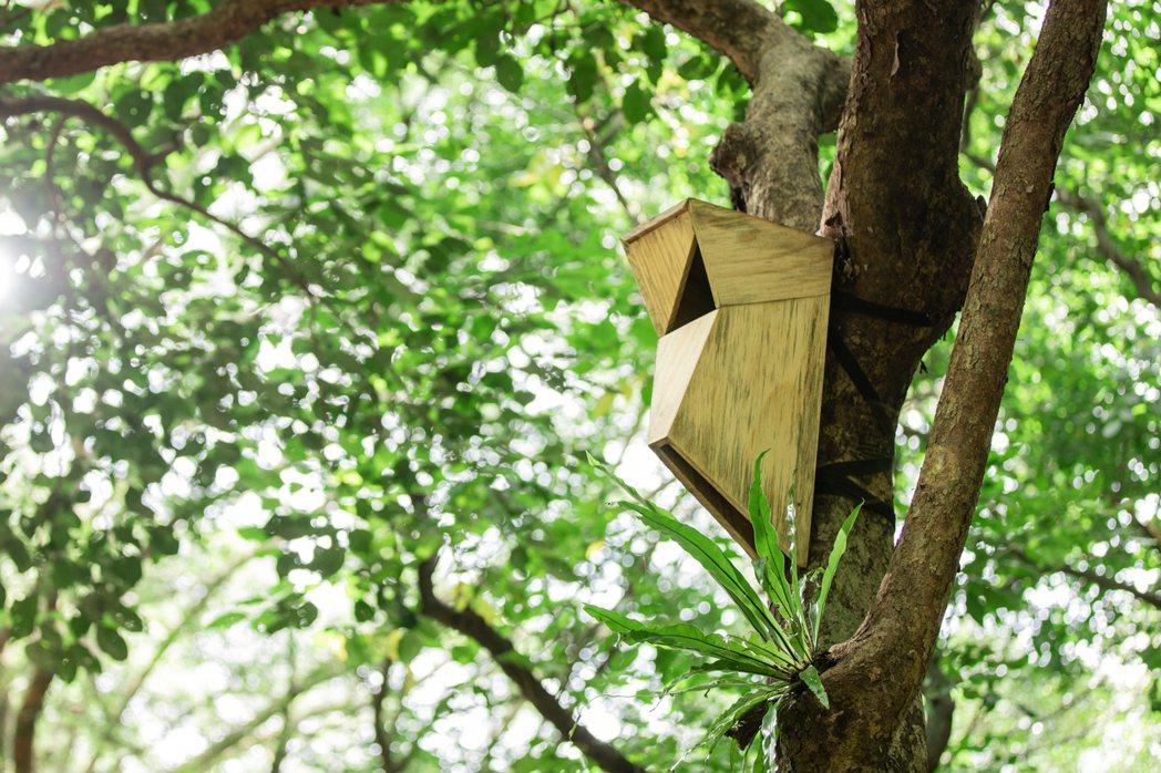 杜昆盈特地根據鳥類習型,打造出通風、安全的特殊鳥屋,讓鳥類棲息。 圖/博威鳥控提...