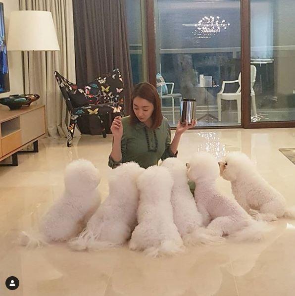 徐孝琳常分享照顧6隻愛犬的生活點滴。圖/摘自IG