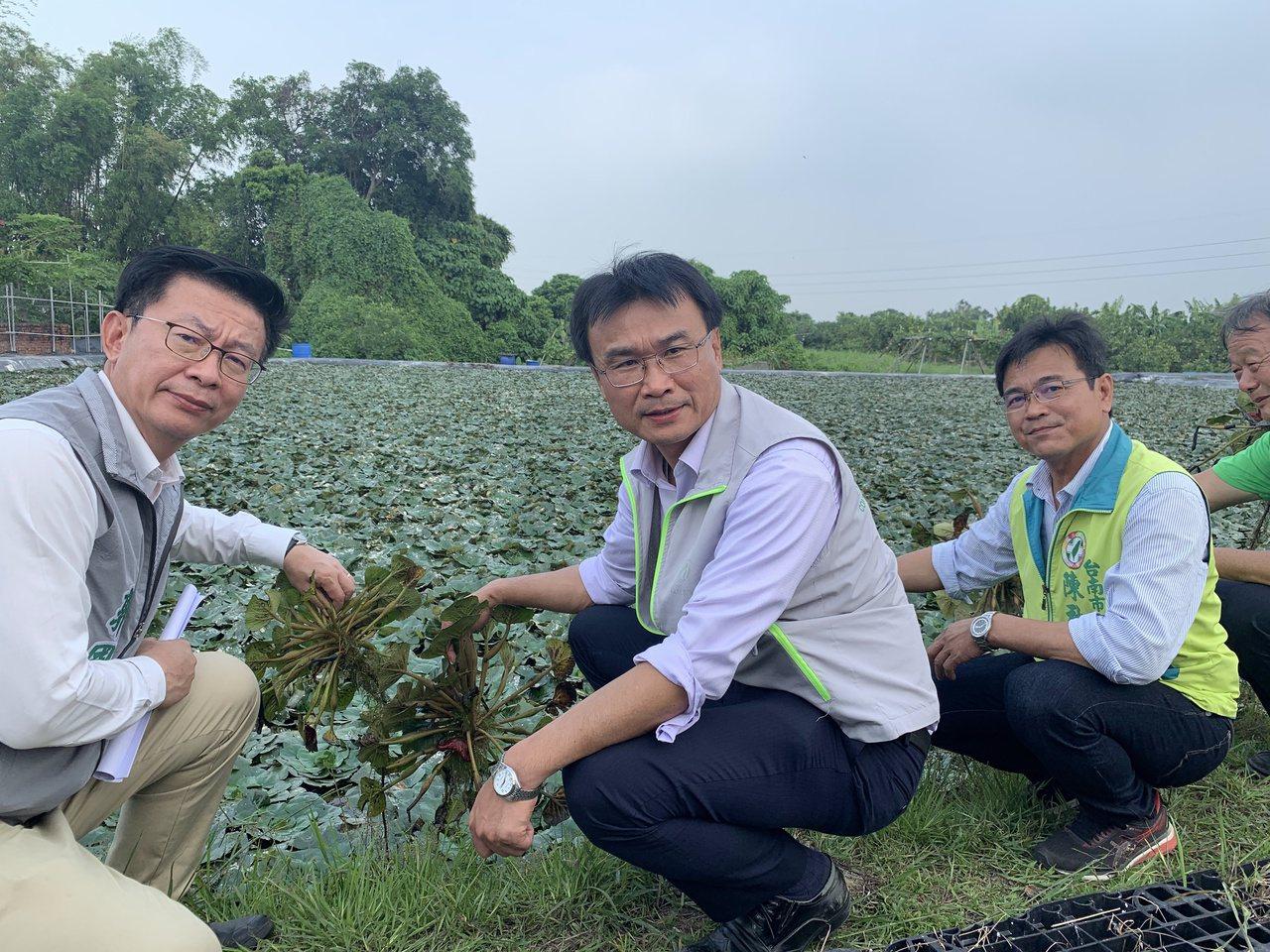 影╱農委會主委勘查台南菱角災損 每分地1000元資材補助