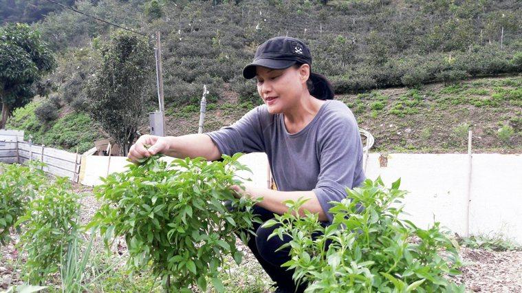 毒瓊珍料理使用的食材,幾乎都是來自小農。 圖╱毒瓊珍提供