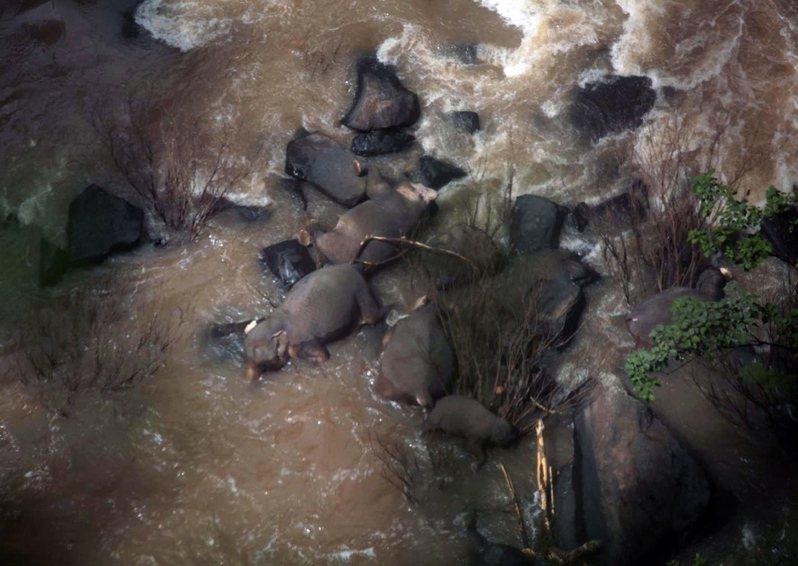 泰國中部的「考艾國家公園」( Khao Yai National Park)日前發生一起慘劇,5頭大象試圖救援一頭墜入瀑布的小象,卻不幸一起喪命,只在懸崖邊剩下2頭大象存活,畫面讓人痛心。歐新社