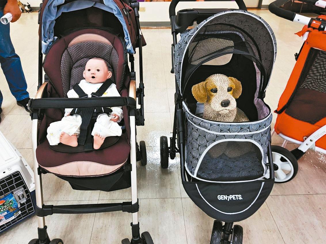北市議員楊靜宇近來接獲不少飼主陳情,指中大型犬推車的尺寸,和市面上的嬰兒車尺寸相...
