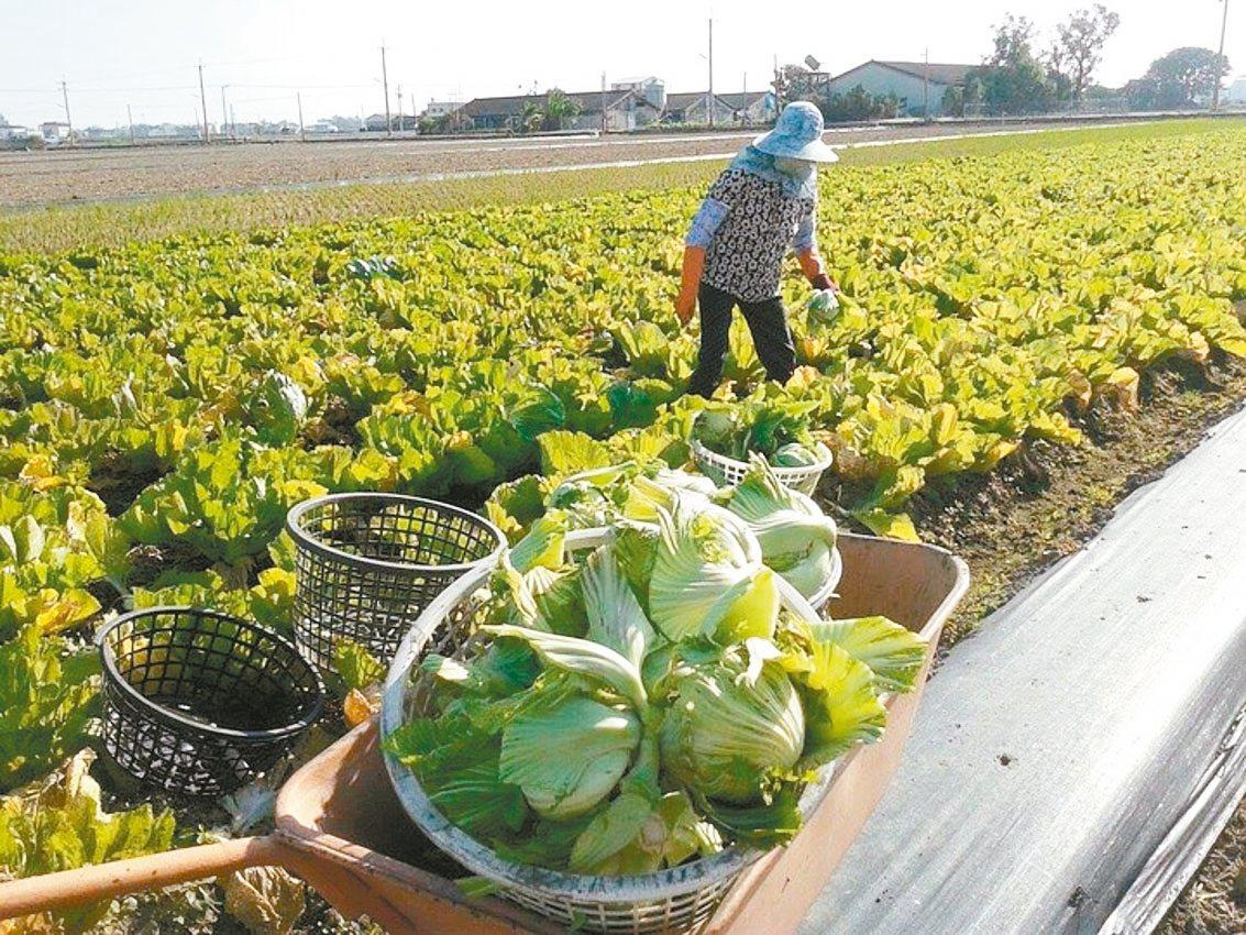農委會已經核釋放寬農保條例,促農地加速釋出,以改變現行農業結構。 圖/聯合報系資...