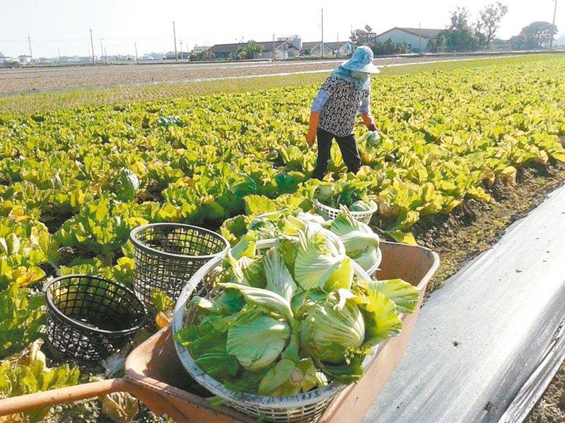 農委會已經核釋放寬農保條例,促農地加速釋出,以改變現行農業結構。 圖/聯合報系資料照片
