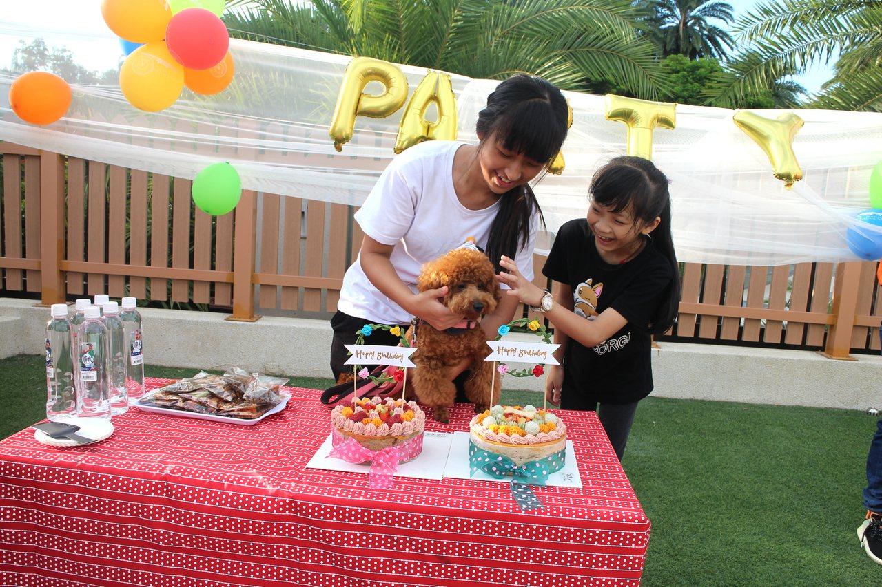 麗寶樂園將辦國慶連假寵物趴,毛小孩可跟主人逛outlet。圖/麗寶樂園提供
